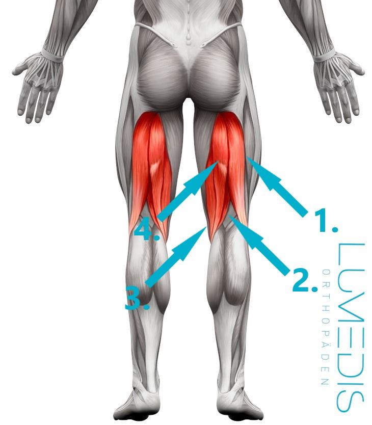 Erkennt einen wie im oberschenkel muskelfaserriss man Muskelfaserriss im