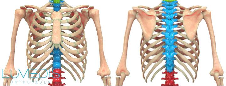 Muskelfaserriss Rippen Durch Husten